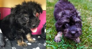 Meet My New Rescue Puppy Saint Koko ❤  His Miracle Story...