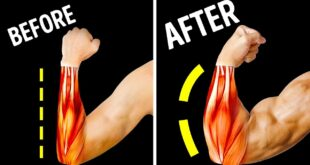 Only 14 Exercises You Need for Bigger Forearms